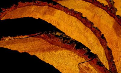 tree rings 1_8108