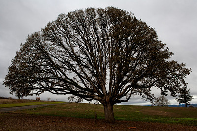 tree_8038
