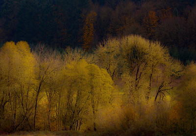 autumn trees_7957