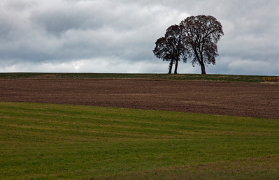 three trees_8020