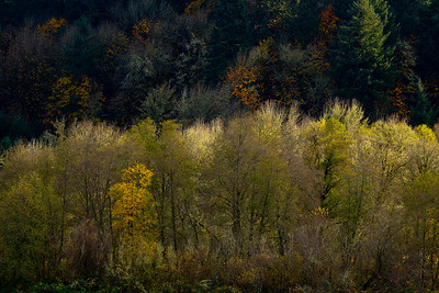 autumn trees_7972