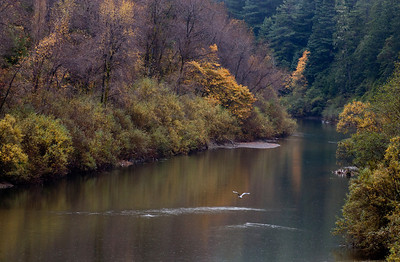 RBH Eel River_8906