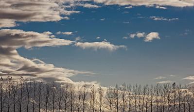 bare trees_8058