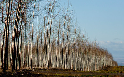 Tree Farm I84 West_5114