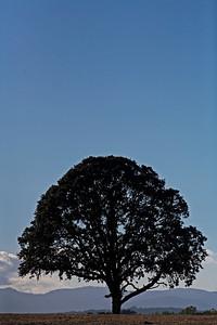 lone oak carlton or_1183