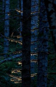 Tree Backlit_1844