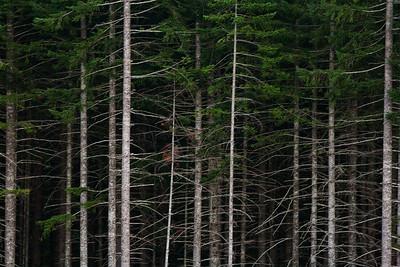 Forest North Coast Range OR_1915