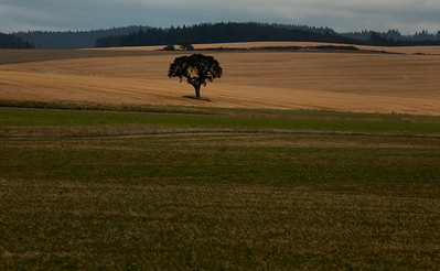 Lone tree cut field_1402