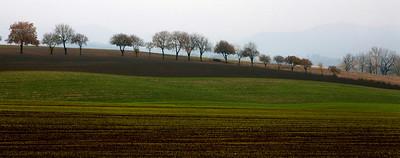 autumn trees_7854