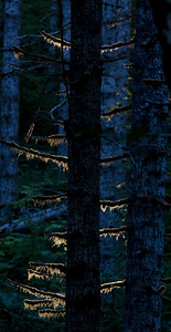 Tree Backlit_1844 3