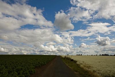 fields_6317