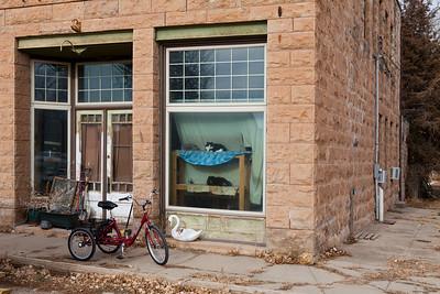 Three Cats in Window St Onge SD_4611