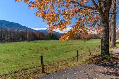 Orange Autumn Leaves In Cades Cove