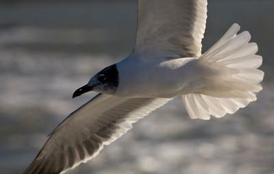bird_3805