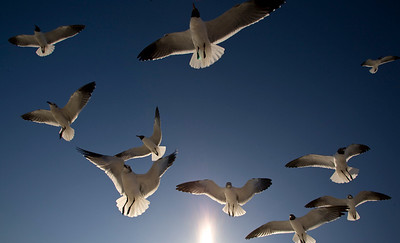 golly look at the gulls_3789