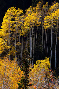 Aspen Deer Creek Canyon_1250