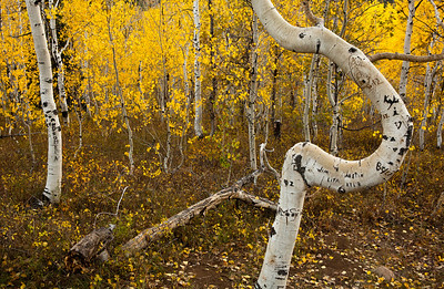 Twisted Aspen American Fork Canyon (Hwy  92) through Uinta National Forest to Provo Canyon_0036
