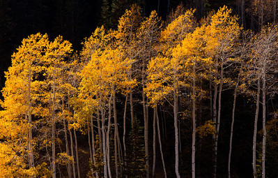 Aspen Deer Creek Canyon_1248