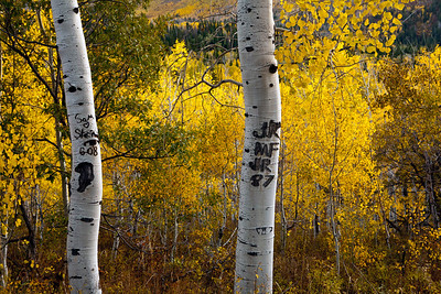 Aspen Initials Carving American Fork Canyon (Hwy  92) through Uinta National Forest to Provo Canyon_0022