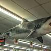 CoastalArtCenter-stores-09
