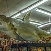 CoastalArtCenter-stores-11