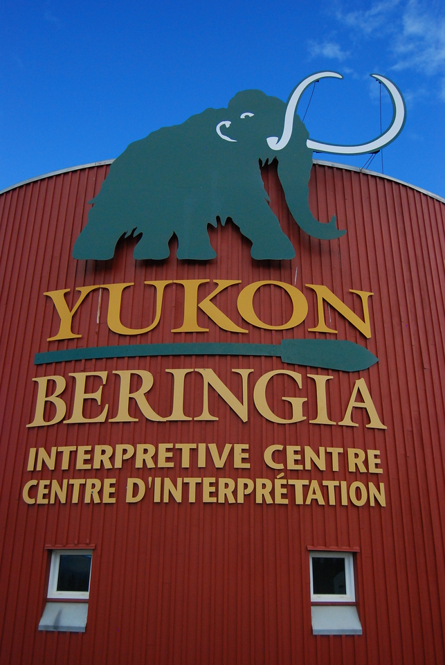 The Beringia Museum has a wonderful display telling the story of the ice age, how it shaped the artic areas of the planet and affected plants, animals and people.