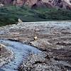 """Bear & Cub""<br /> Denali National Park and Preserve, Alaska, USA<br /> Film photograph"