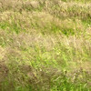 Blowing marsh grass at Potter Marsh, a popular bird-watching spot near Anchorage.