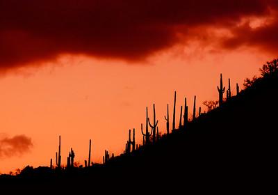 Arizona Scenics-5