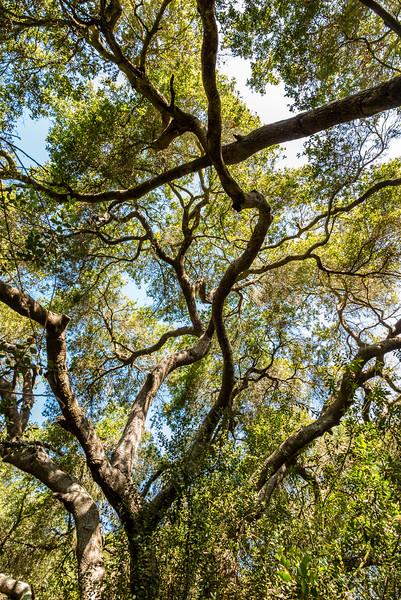 Aliso and Wood Canyons, Orange County, California, United States