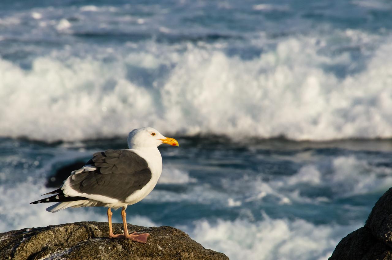 Monterey Peninsula, California, United States