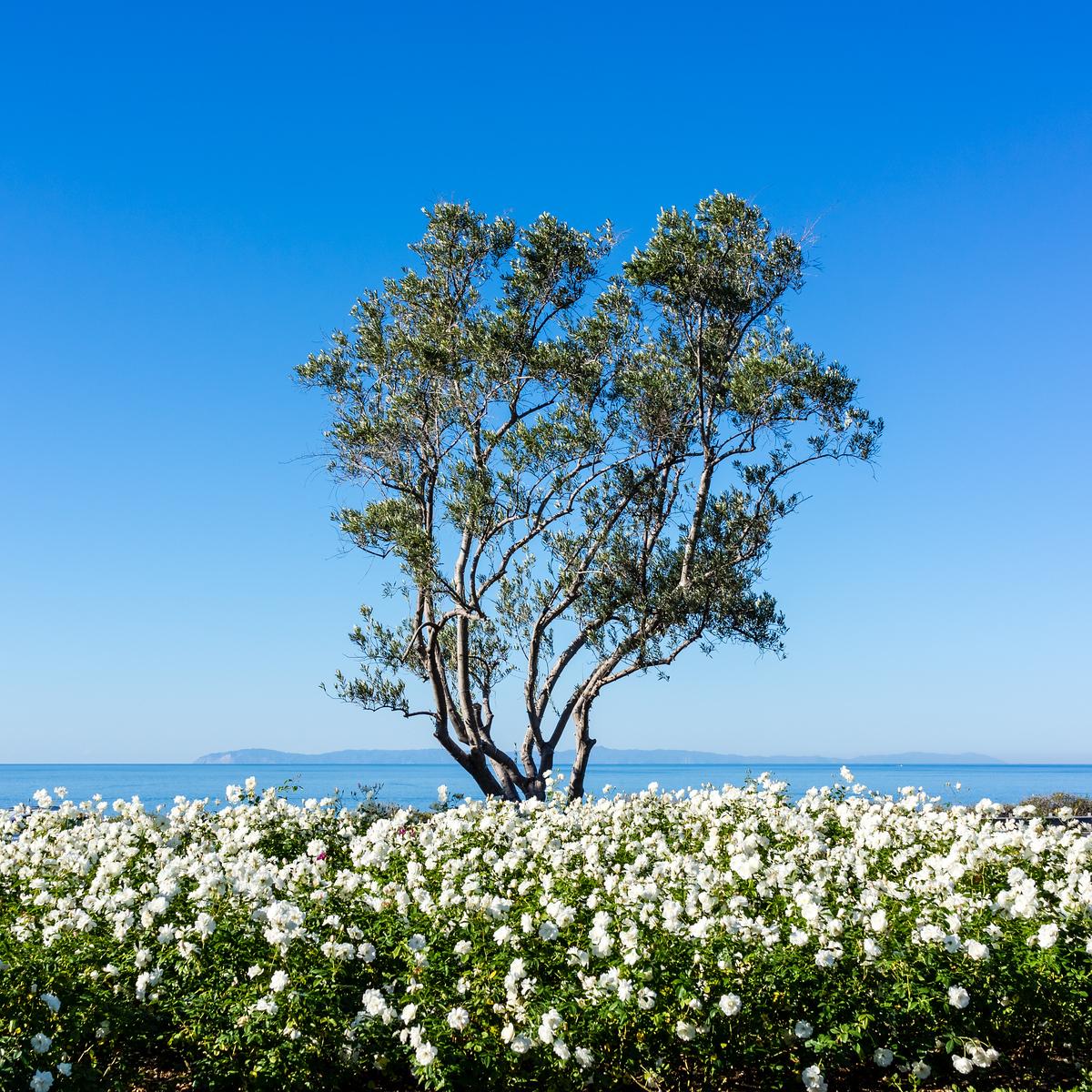 Crystal Cove, Laguna Beach, Newport Coast, Newport Beach, Orange County, California, United States