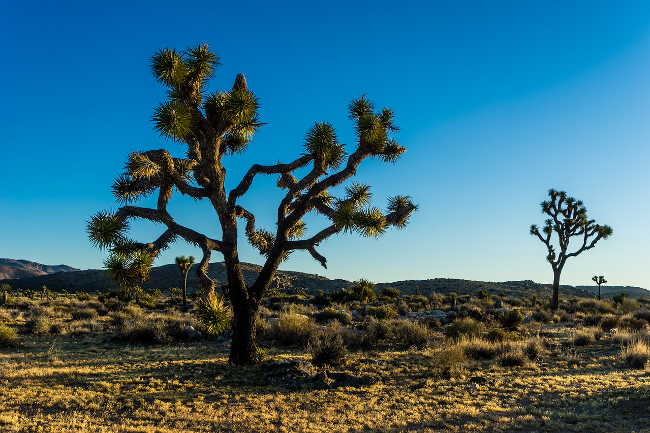 Joshua Tree National Park, California, United States