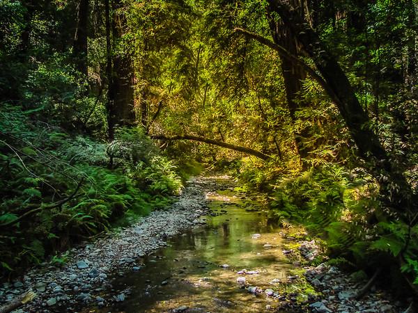 Muir Woods Creek