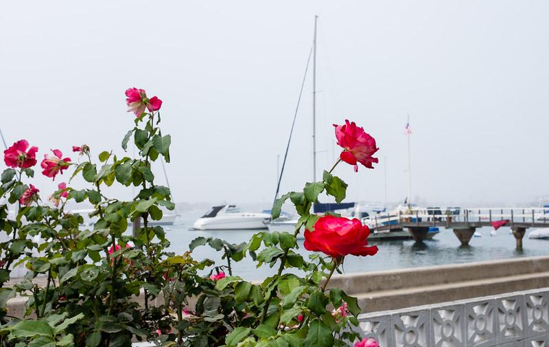Balboa Island, Newport Beach, Orange County, California, United States