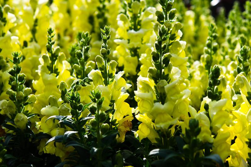 Roger's Gardens, Corona Del Mar, California