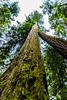 Redwood National Park, California, United States