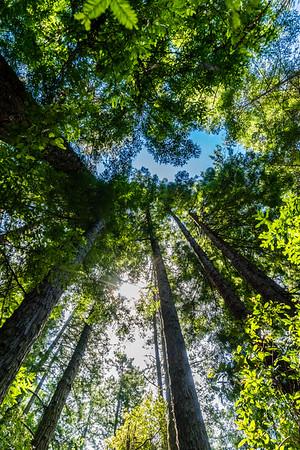 Jug Handle, Mendocino County, California, United States