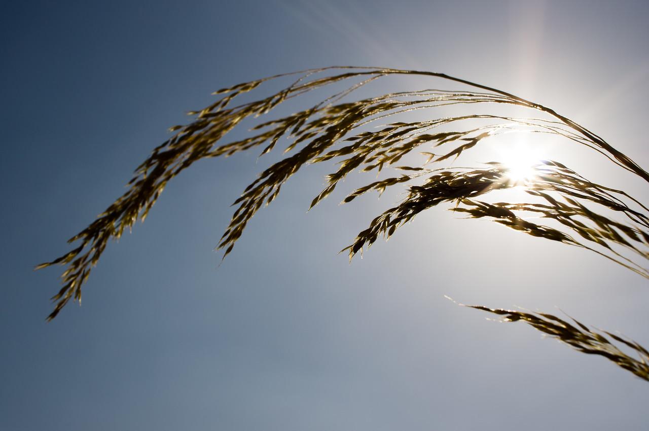Grass, Orange, California, United States