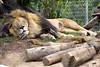 San Diego Zoo, Zoo, California
