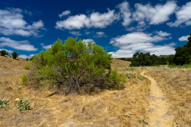 Thomas Riley Wilderness Park, California
