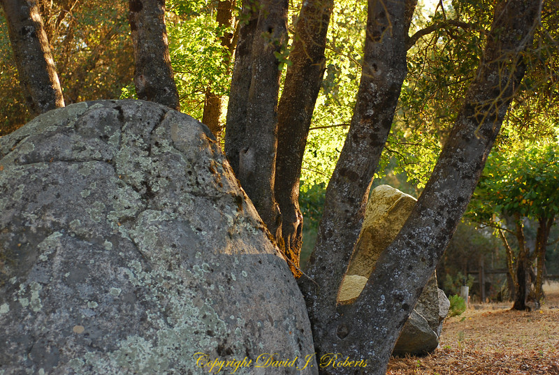 Big rock and trees in morning light, Meadow Creek Ranch, Mariposa, California