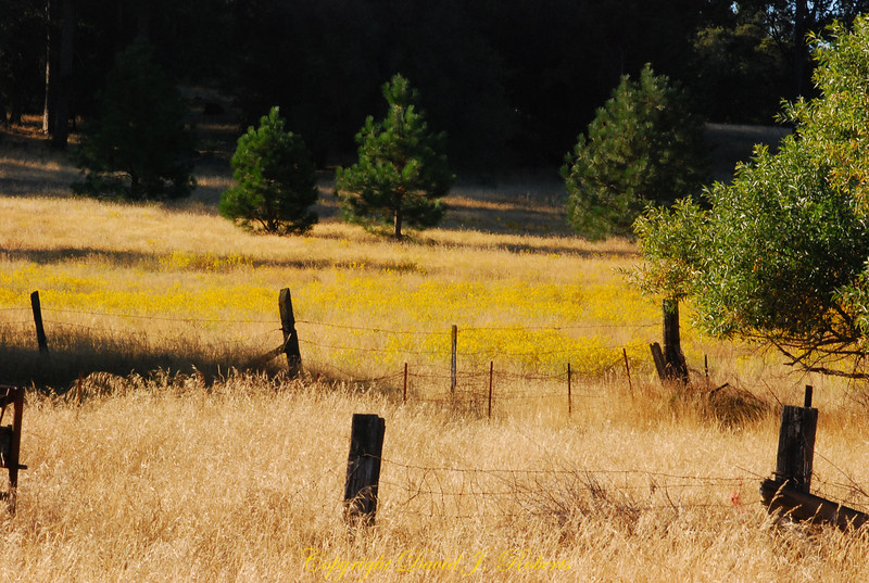 Meadow and fences, Meadow Creek Ranch, Mariposa, California