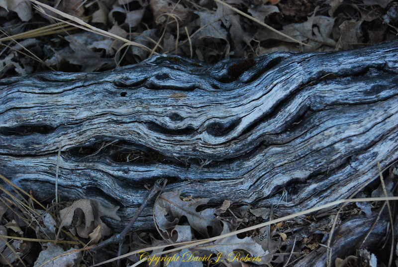 Old wood - dry leaves, Meadow Creek Ranch, Mariposa, California