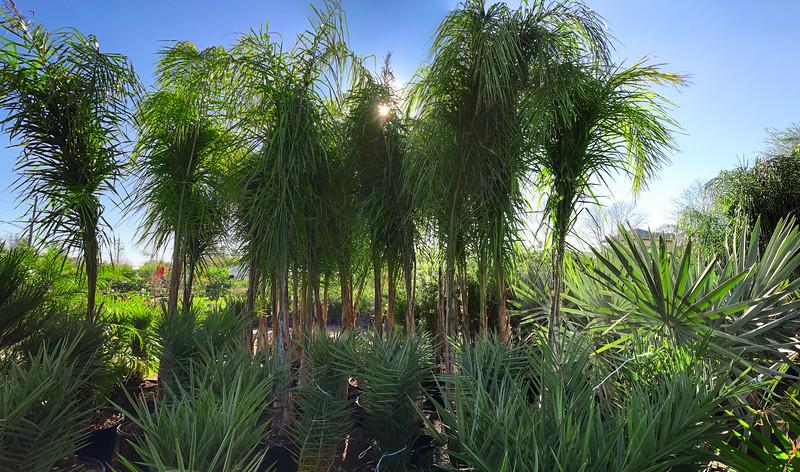 Jim Binghams Plants