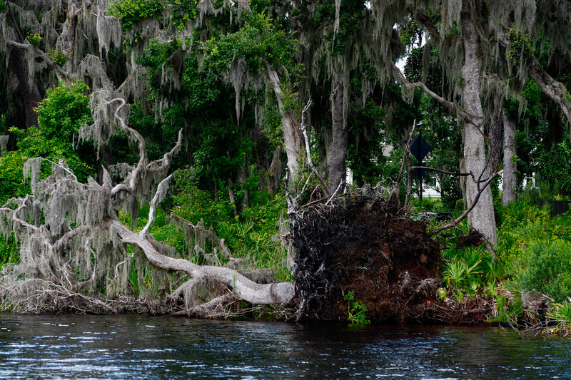 Fallen Tree Riverfront Park