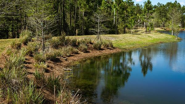 Pond - Enclaves Entrance