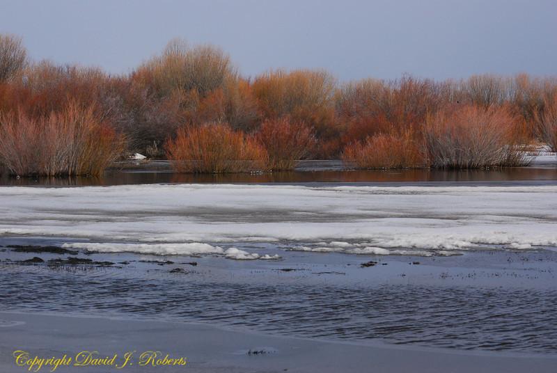 Wetlands and willows near Fairfield, Idaho