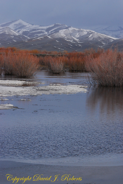Wetlands and willows near Fairfield, Idaho