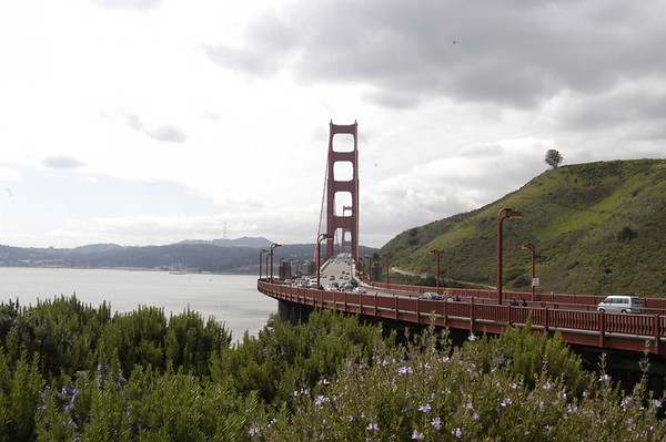 More San Francisco and Muir Woods with Ron Cohn